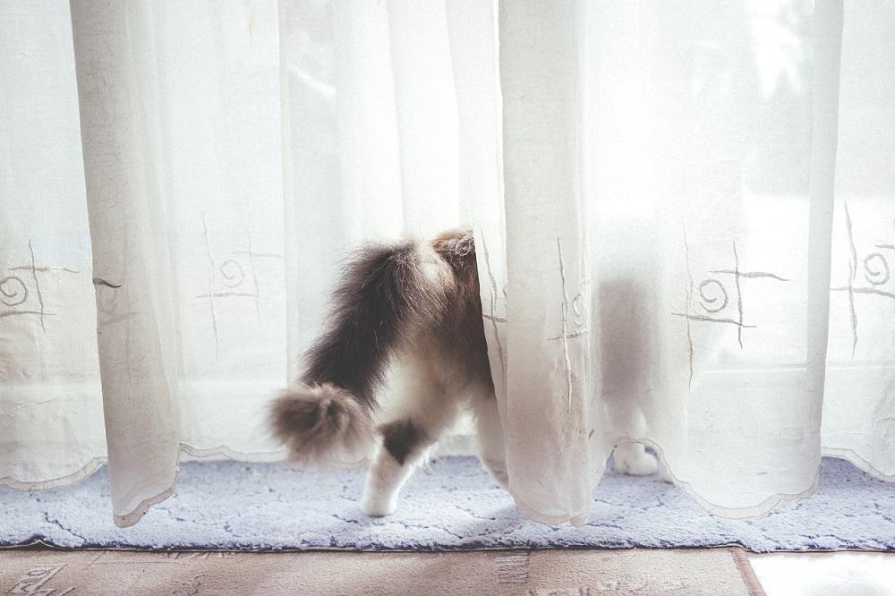 Un perro en casa puede provocar estornudos. El ozono es la mejor solución a las alergias