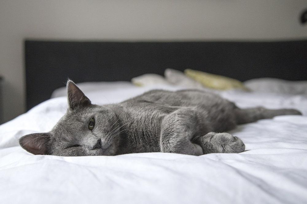 Olvídate del olor a gato en tu casa usando ozono